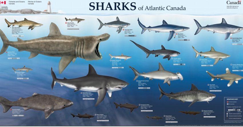 shark week 2020 - photo #20