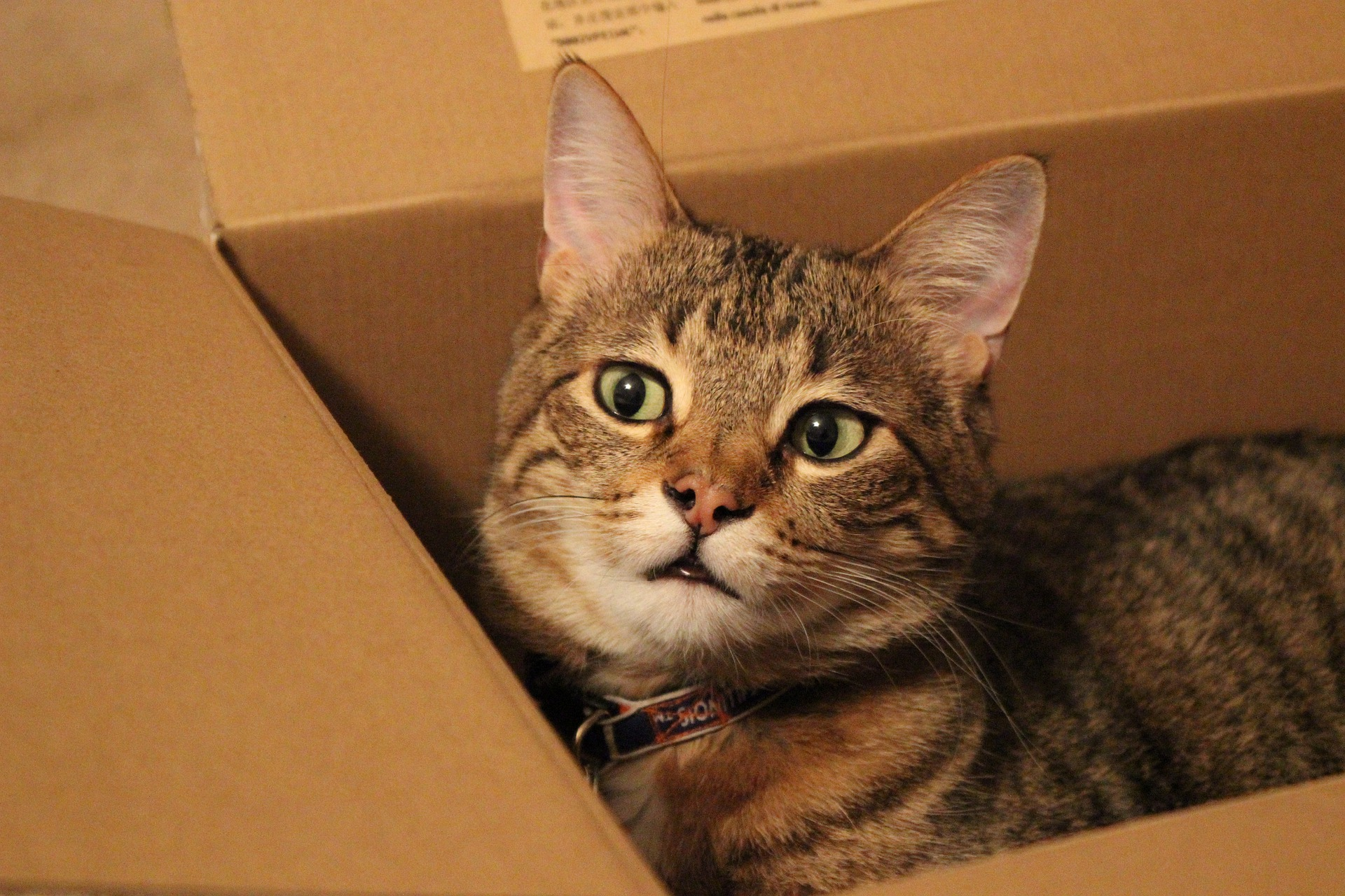 It's official: Cardboard boxes help alleviate cats' stress ...